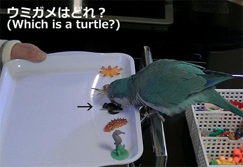 海洋生物1_9