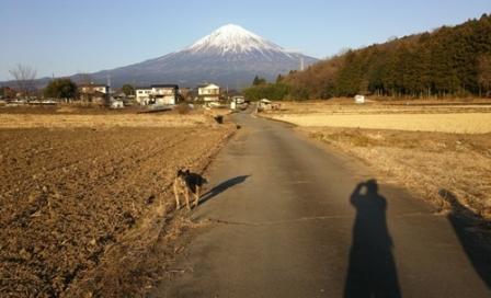 マロンと富士山1