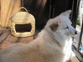 猫つぐらとせんべいIMG_7420