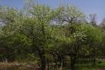 IMGP4961.jpg