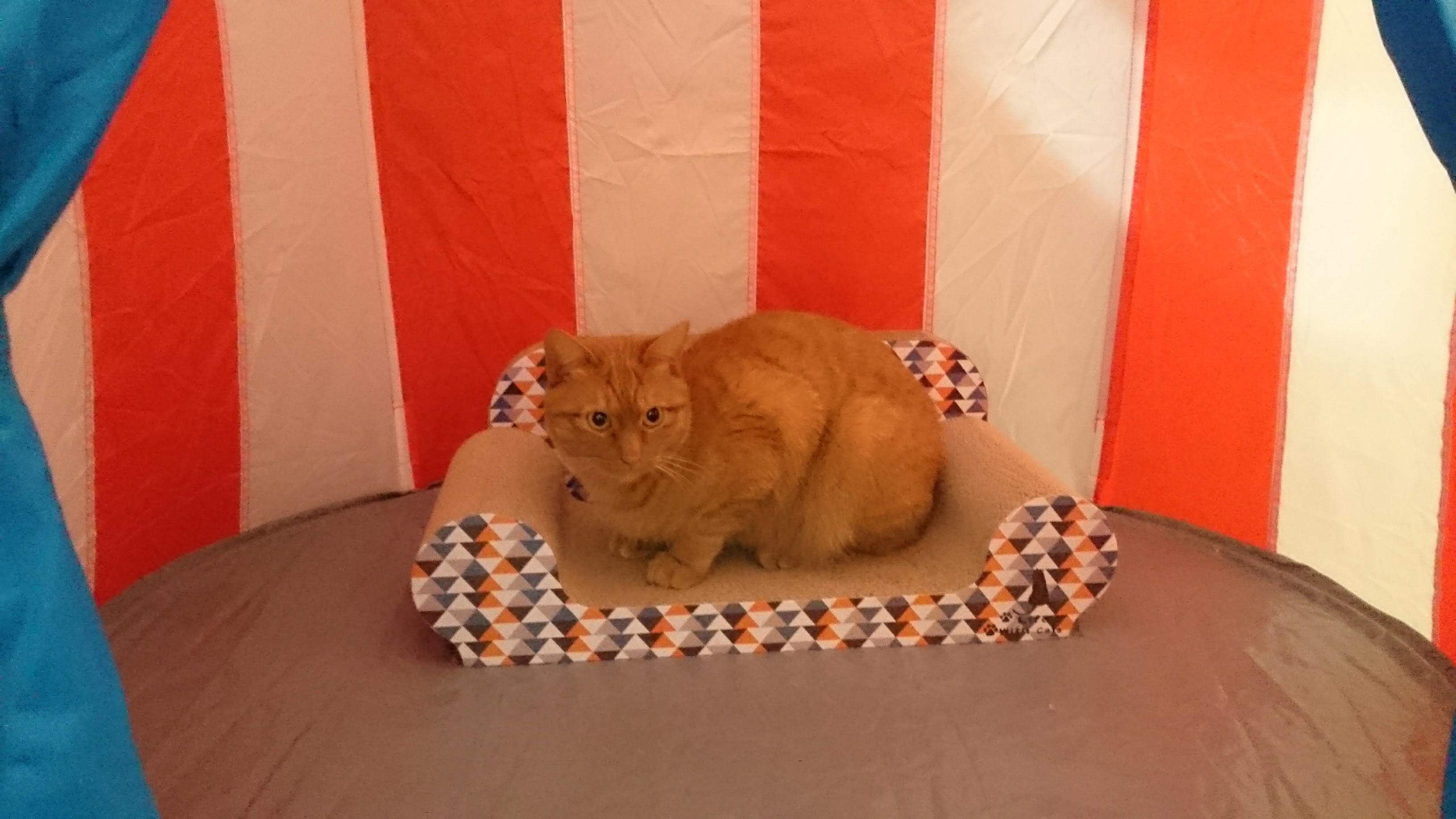 猫のテント