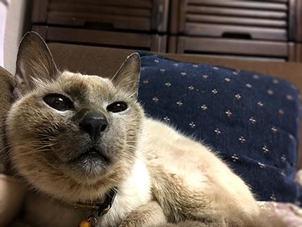 老猫 ミル