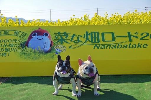 2-20菜畑ロードふるうたカンバン②