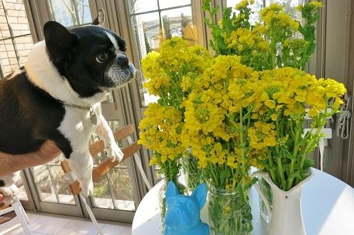 2-20菜の花花瓶に