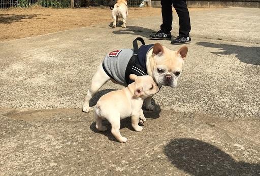 3-20仔犬ちゅ