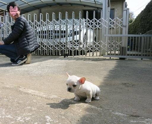 3-20固まる仔犬