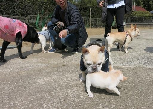 3-20うた仔犬2