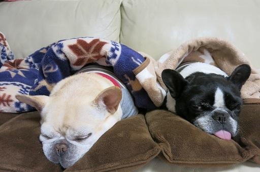 4-10ソファーに毛布