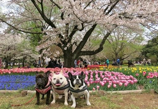 4-15桜チュ3人