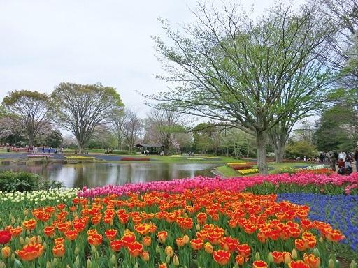 4-15公園景色3