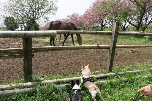 4-26馬さん発見