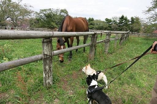 4-26うた馬さんと会話