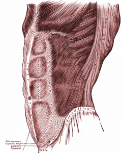 Grays_Anatomy_image392.png