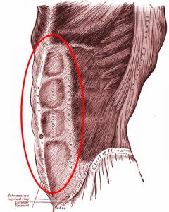 Grays_Anatomy_image.png