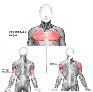 pushmuscle_20170403202336474.png