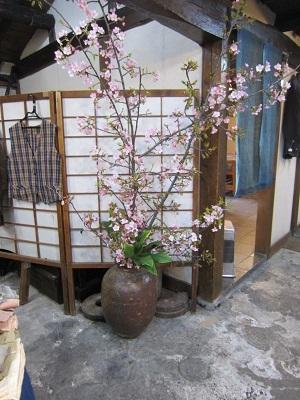 とうやま桜 (2)-6