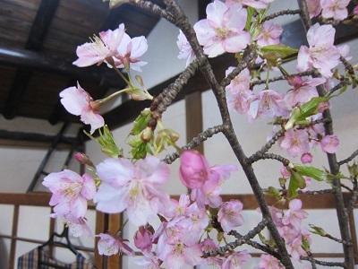 とうやま桜 (4)-5