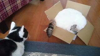 箱はわたちの