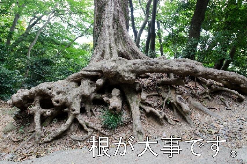 根が強いと確りとしたトレードが可能になります。