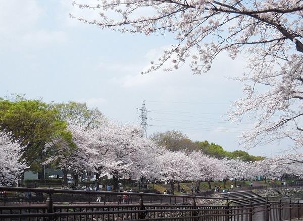 平和市民公園4