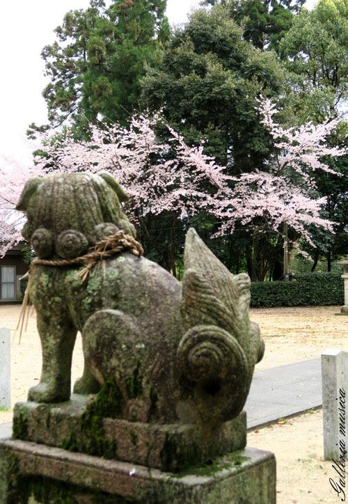 今年の桜1