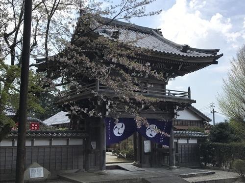 桜とお寺2