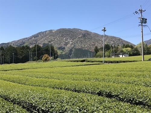 茶畑とやまA