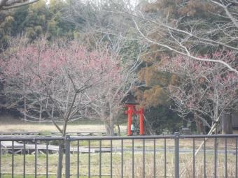 厳島湿生公園170301