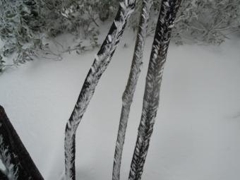 枝に着く雪170401