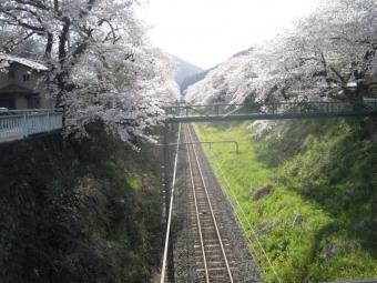 山北駅桜ー2170413