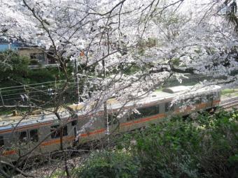 山北駅桜と電車170413