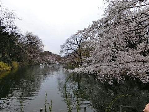 井の頭公園0405 - コピー