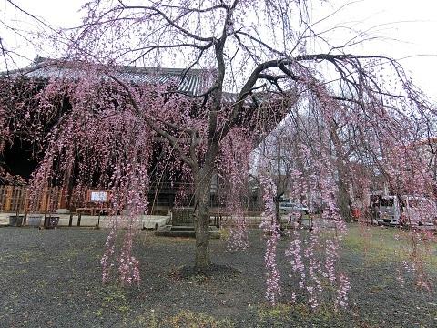京都立本寺0331