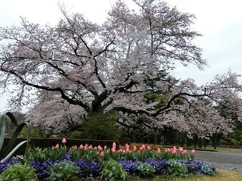 神代植物園04092