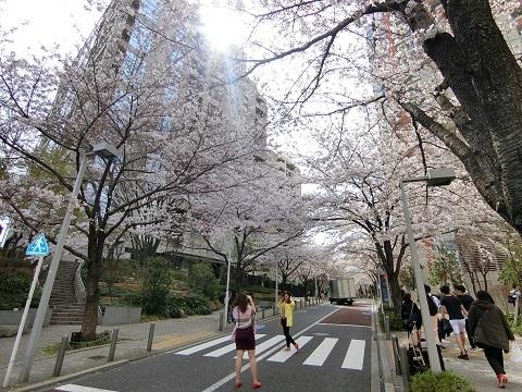 六本木桜坂0406