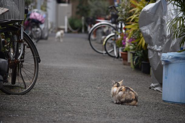 猫17,20