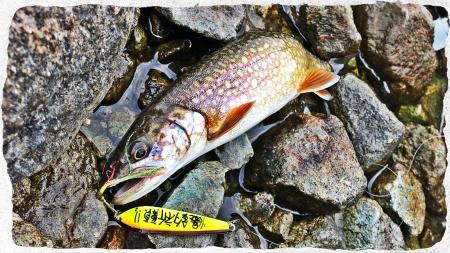 2017 中禅寺湖2 (2)
