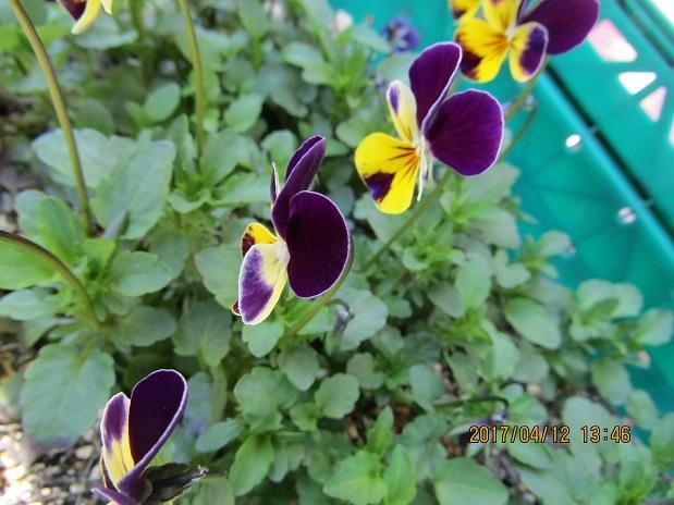家に咲いた花