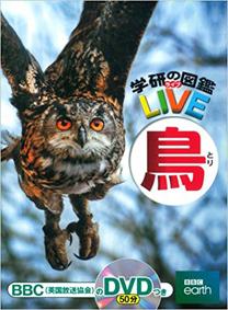 LIVE鳥