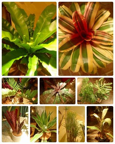 s-観葉植物