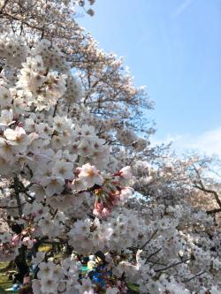 2小石川植物園2017