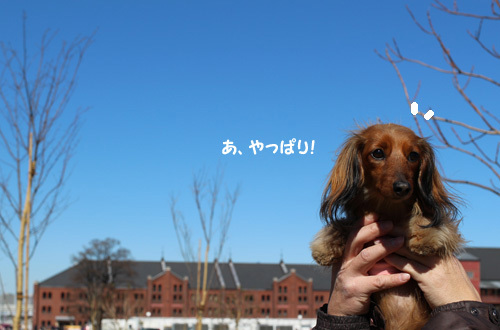 2017-2-yokohama2.jpg