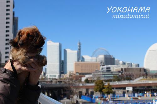 2017-2-yokohama7.jpg
