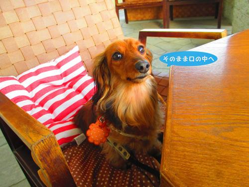 4-1-umi46.jpg