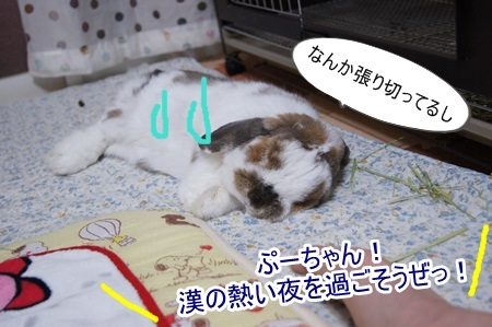 DSC04919_201704062128219a7.jpg