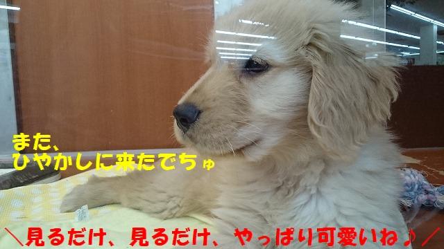 DSC_0053_20170426163813601.jpg