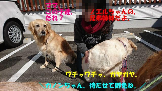 DSC_0375z.jpg
