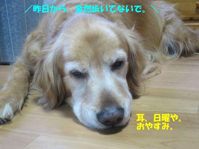 IMG_0012_20170326195606e1c.jpg