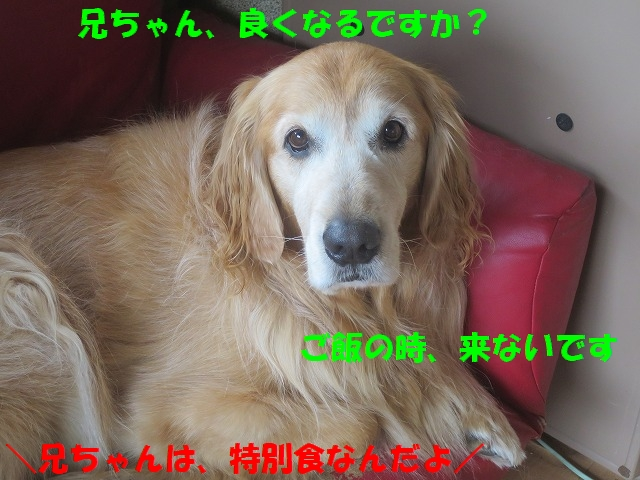 IMG_00419.jpg