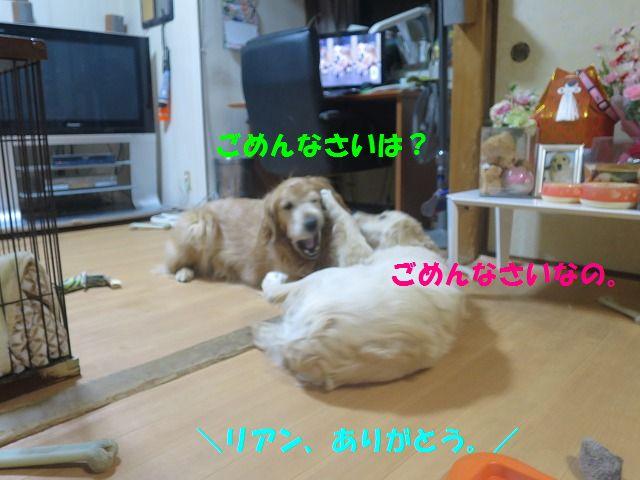 IMG_0087_20170328221831c9b.jpg